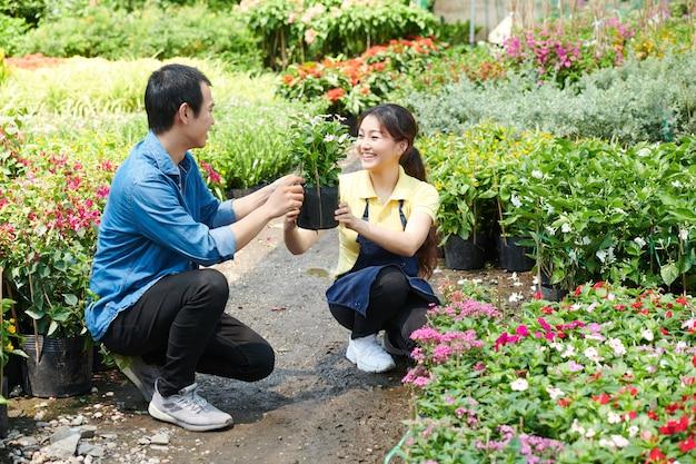 Ouvrier de pépinière aidant un jeune homme à choisir une fleur pour son appartement