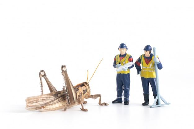 Ouvriers miniatures analysant une sauterelle