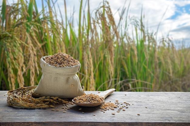 Paddy dans le sac et la cuillère en bois avec le fond de champ de riz