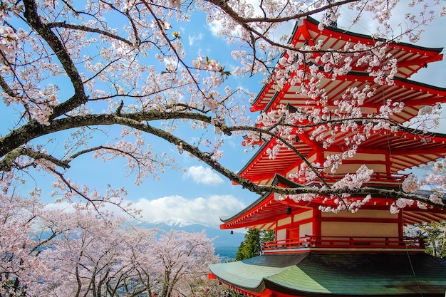 Pagode rouge chureito à la fleur de cerisier et au mont fuji. saison de printemps au japon