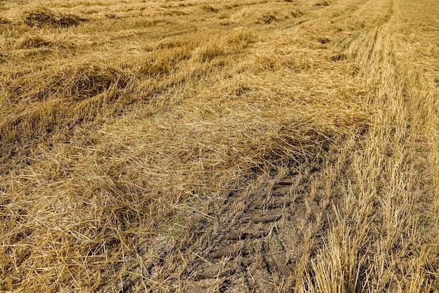 Paille dorée sur terrain avec trace de machine au sol