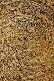 Paille jaune rond balle fond macro texture