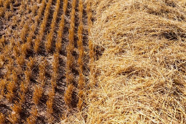 Paille Sur Les Terres Agricoles Photo Premium