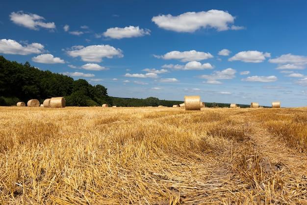 Paille sur les terres agricoles