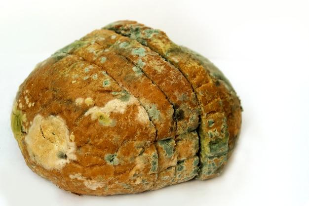 Pain couvert de moisissure, un tas de pain de blé avarié. photo en gros plan d'un motif de moisissure multicolore.