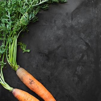 Paire de carottes avec espace de copie
