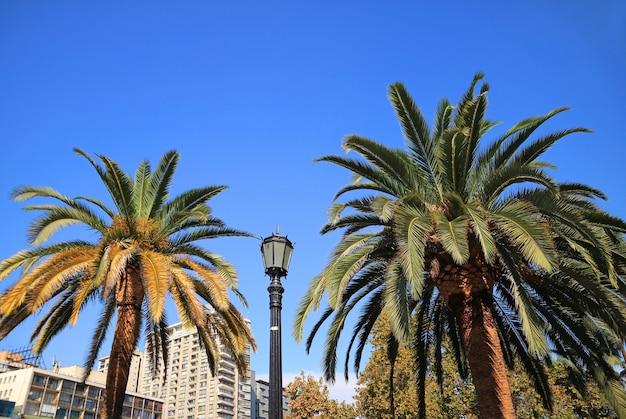 Paire de palmiers avec un lampadaire contre le ciel clair bleu vif