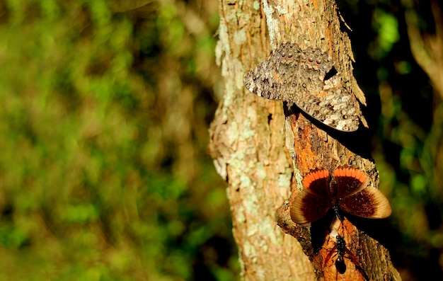 Paire de papillons reposant sur le tronc d'arbre