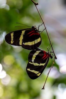 Une paire de papillons