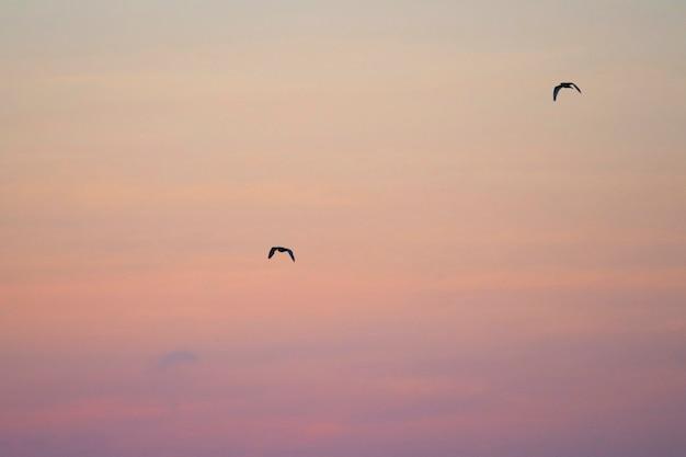 Paire de pétrels des galápagos volants dans un ciel rose des îles galápagos