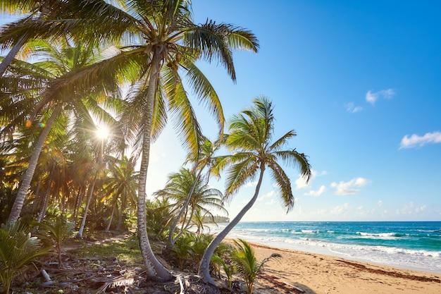 Palm beach dans tropical paradise island idyllique - caraïbes - république dominicaine punta cana