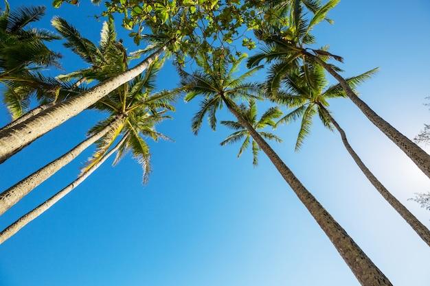 Palm sur la plage tropicale