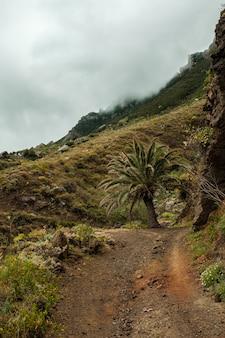 Palmier au milieu d'un chemin dans le parc national d'anaga