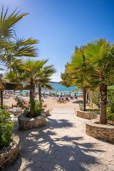 Palmier et chaises longues sur la plage de sable en albanie