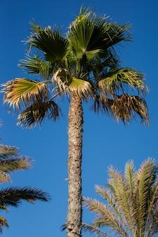 Palmier avec un ciel bleu ensoleillé