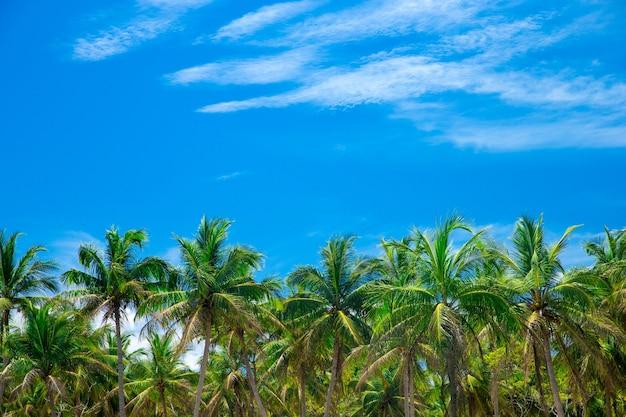 Palmier sur le ciel