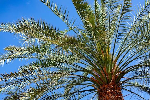 Palmier contre le ciel bleu d'été