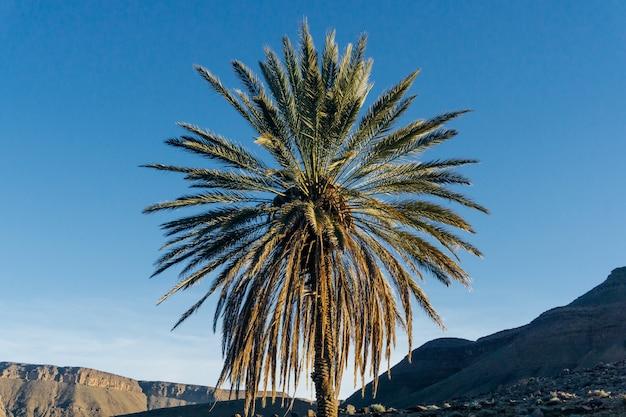 Palmier contre ciel bleu