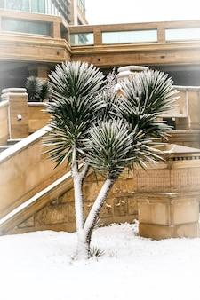 Palmier couvert de neige