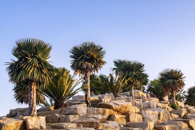 Palmier et cycadier décoré dans le magnifique jardin de rocaille dans le parc