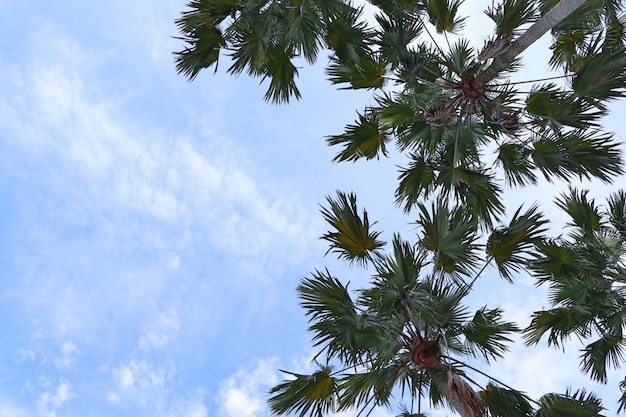 Palmier dans le ciel
