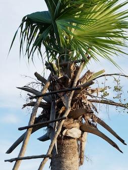 Palmier avec escalier en bois.