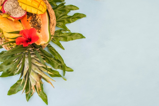 Palmier à feuilles vertes tropicales. fond d'été