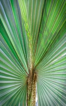 Palmier à feuilles vertes
