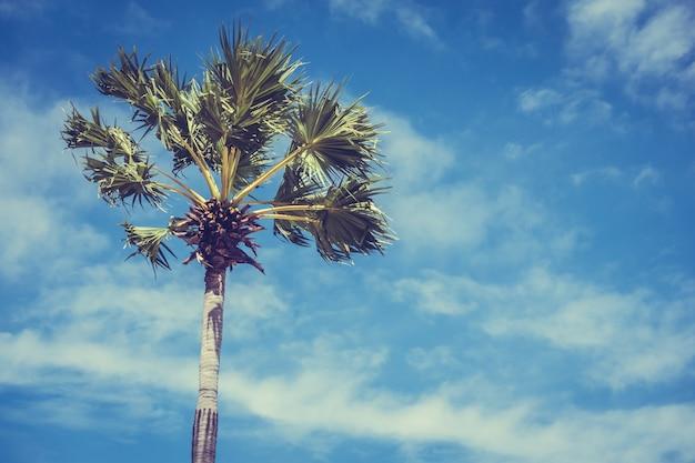 Palmier avec fond de ciel