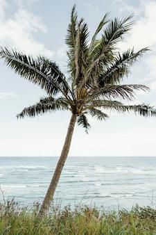 Palmier à hawaii