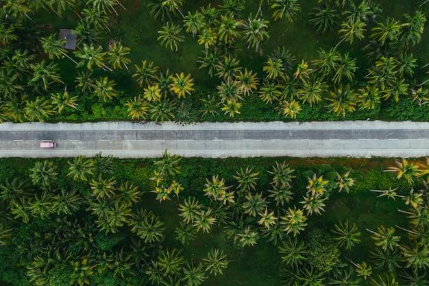 Palmier jungle aux philippines. concept sur les voyages tropicaux wanderlust.