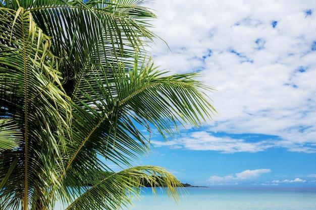 Palmier en mer avec ciel