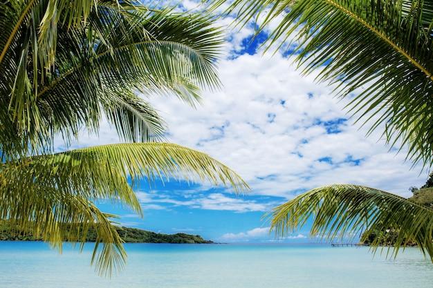 Palmier en mer avec ciel.