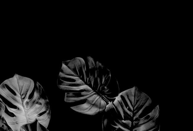 Palmier monstera noir tropical laisse fond d'arbre