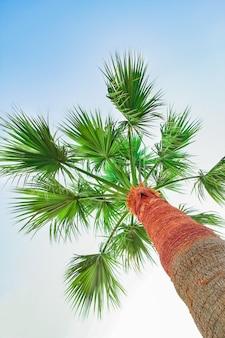 Palmier sur la nature au bord de la mer fond de piscine