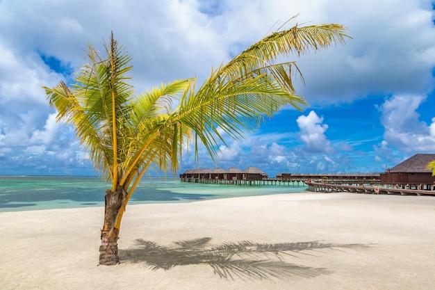 Palmier à la plage tropicale aux maldives