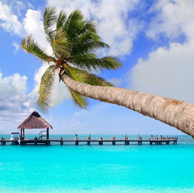 Palmier à la plage tropicale parfaite