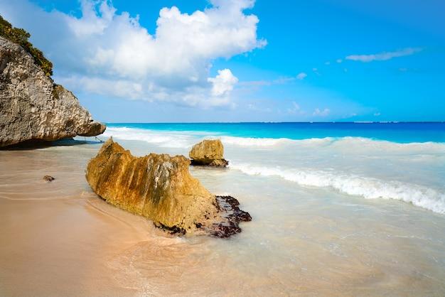 Palmier de la plage de tulum sur la riviera maya