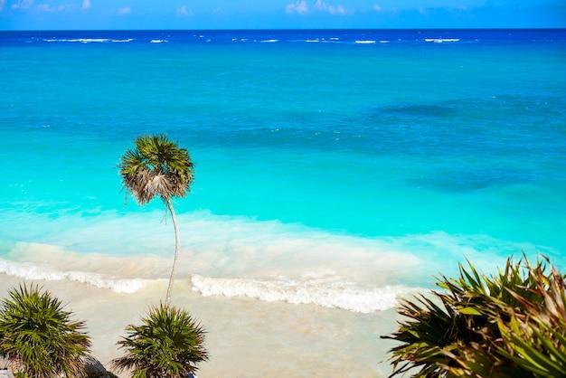 Palmier de plage turquoise de tulum sur la riviera maya au mayan