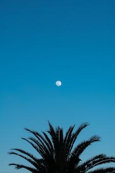 Palmier silhouette et pleine lune sur ciel bleu