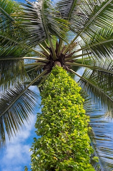 Palmier et soleil éclatant sur ciel bleu