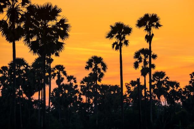 Palmier à sucre silhoette avec ciel crépusculaire au coucher du soleil