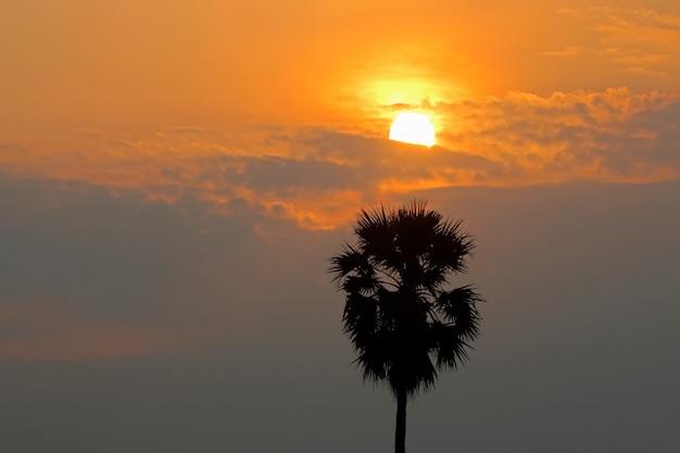 Un palmier à sucre avec le soleil sur le ciel gloden au coucher du soleil