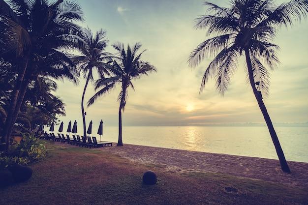 Palmier tropical coucher de soleil été