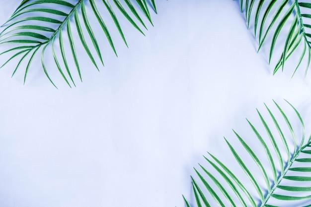 Palmier tropical et fond de feuilles de monstera
