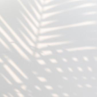 Palmier tropical laisse l'ombre sur un mur blanc