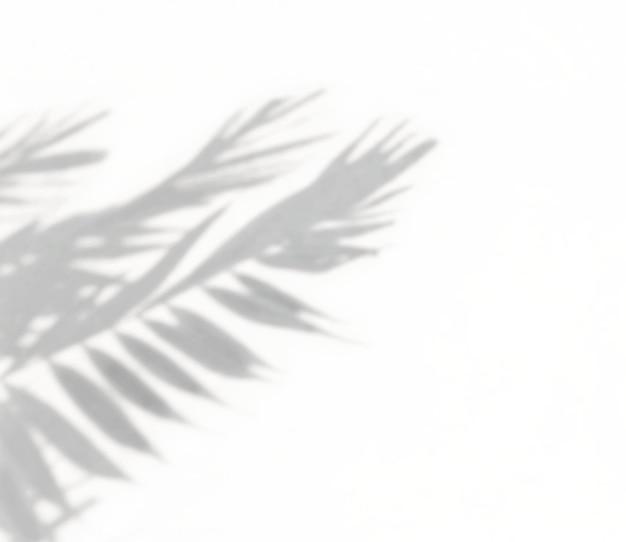Le palmier tropical laisse une ombre naturelle sur un effet de superposition de mur blanc pour une maquette de photo