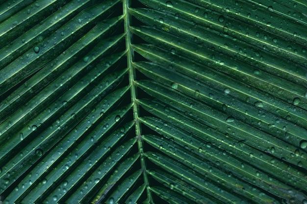 Palmier vert abstrait laisse la nature avec des gouttes de pluie