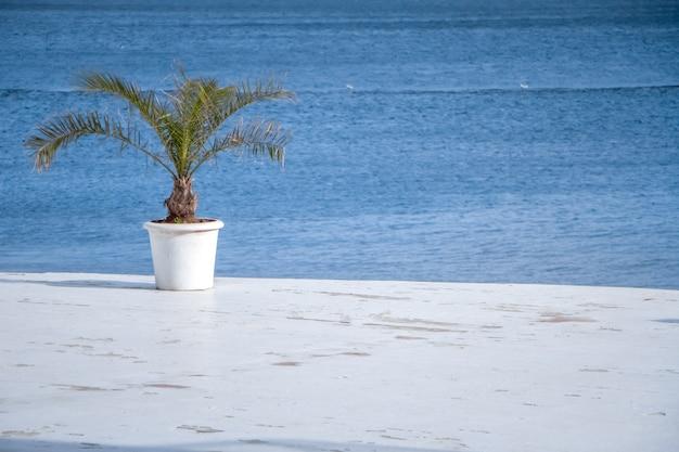 Un palmier vert dans un pot blanc est debout sur la jetée contre la mer bleue