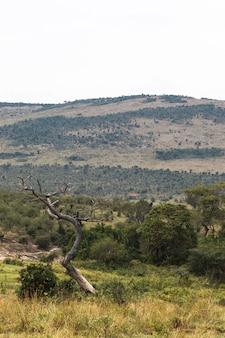 Palmiers en arrière-plan des collines du kenya afrique